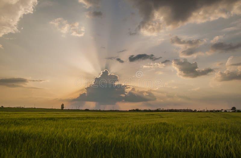 Champ de blé au coucher du soleil photographie stock