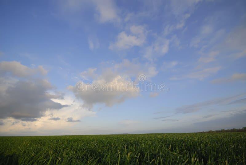 Champ de blé et des nuages le soir, un paysage rural Spr images stock