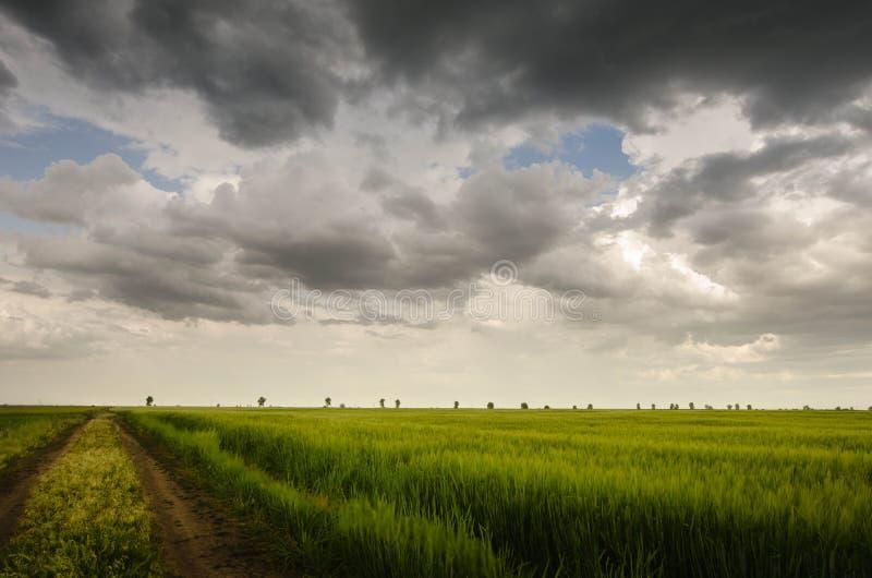 Champ de blé et nuages de tempête verts image libre de droits