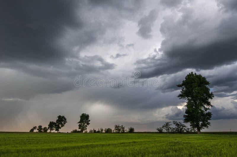 Champ de blé et nuages de tempête verts images libres de droits