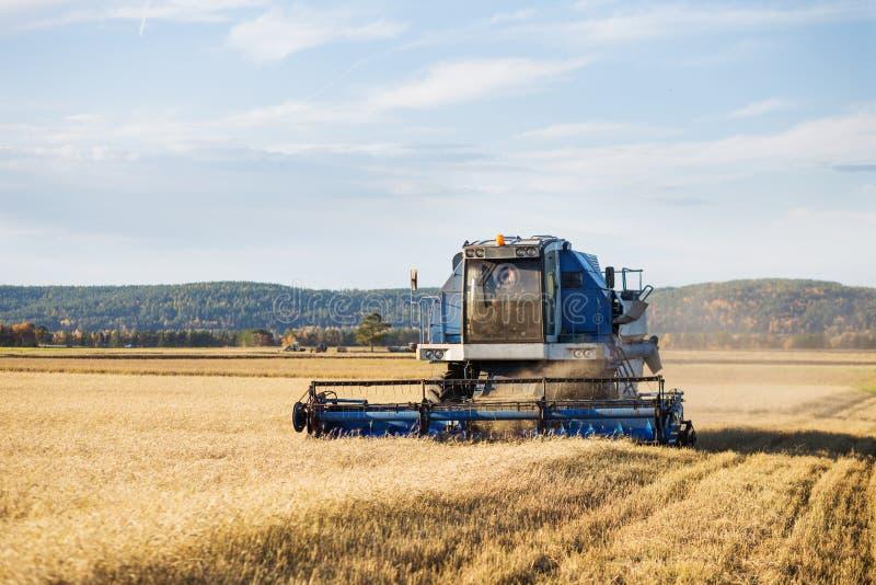 Champ de blé mûr d'or de recolte mécanique d'agriculture de moissonneuse de cartel image stock