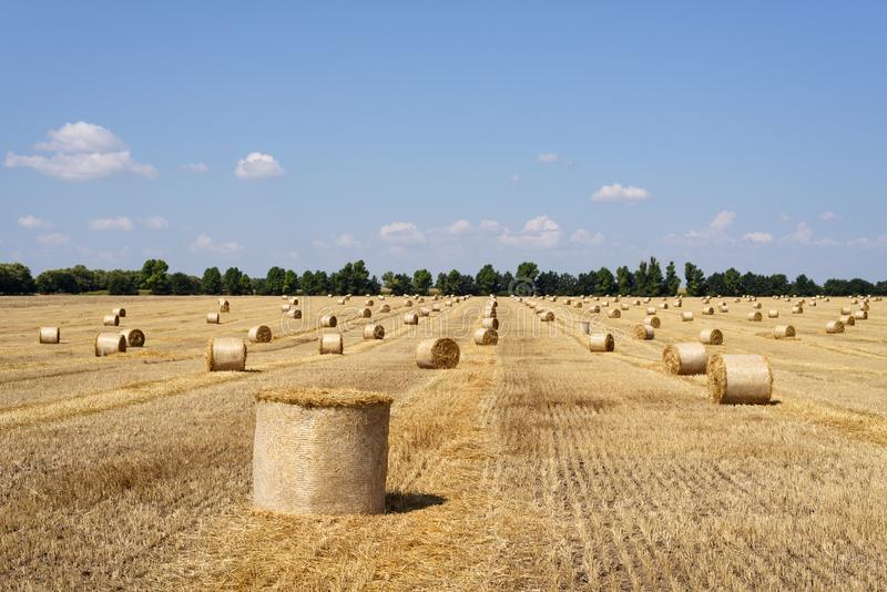 Champ de blé de récolte image libre de droits