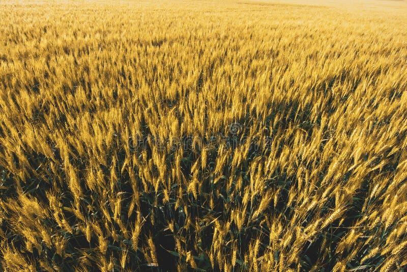 champ de blé sous le ciel de nuage de coucher du soleil photographie stock