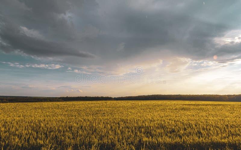 champ de blé sous le ciel de nuage de coucher du soleil photo libre de droits