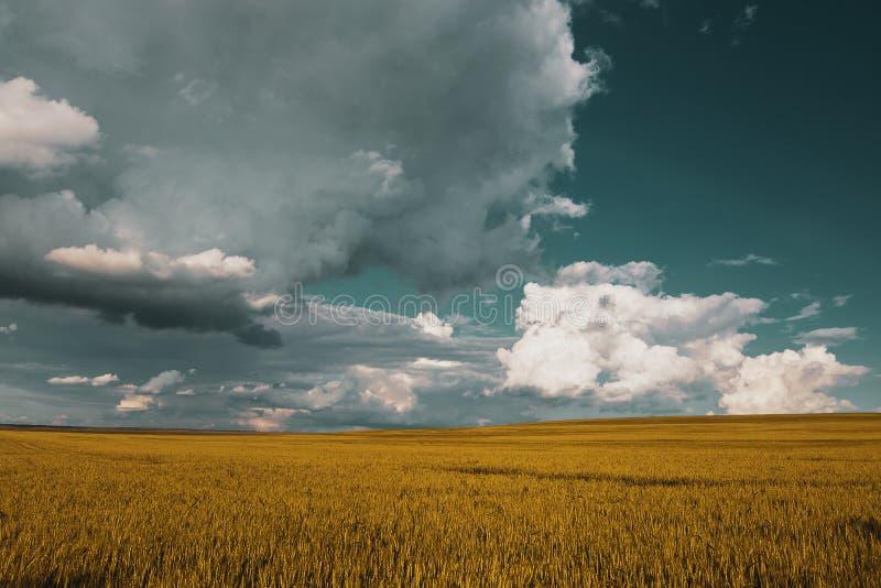 champ de blé sous le ciel de nuage de coucher du soleil images libres de droits