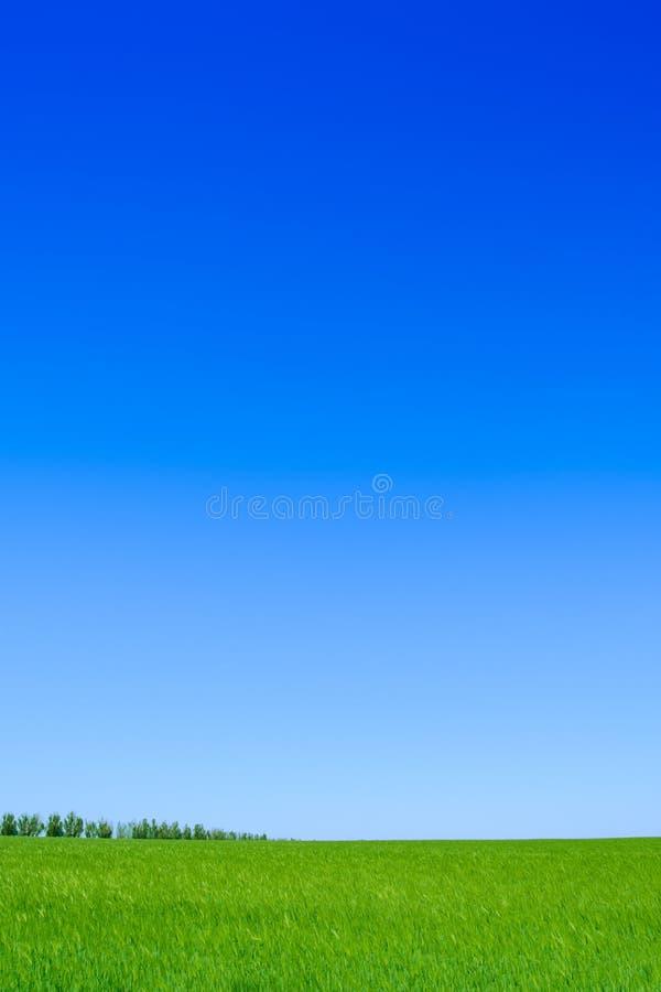 Champ de blé vert et ciel bleu. Fond de paysage photo stock
