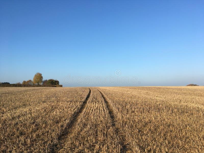 Champ de chaume de maïs après récolte, Somerset, Angleterre images libres de droits