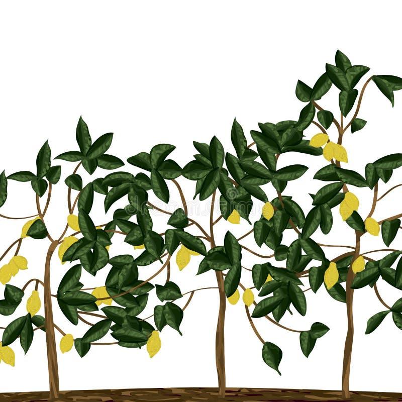 Champ de citronnier illustration libre de droits