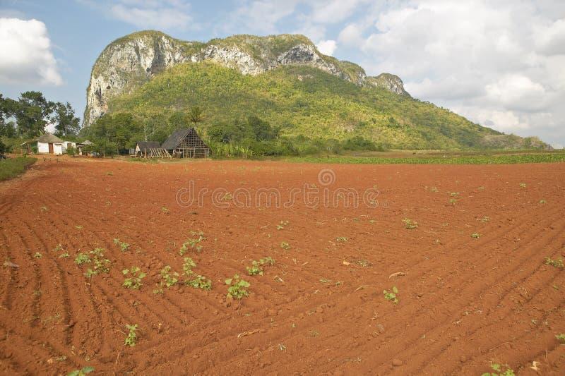 Champ de ferme avec le sol rouge avec des montagnes de chaux dans les bières anglaises de ½ de ¿ de Valle de Viï, au Cuba central photos stock