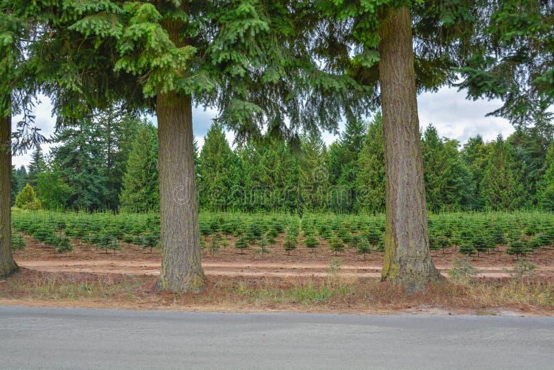 Champ de ferme d'arbre avec des actions de plantation à la route photographie stock