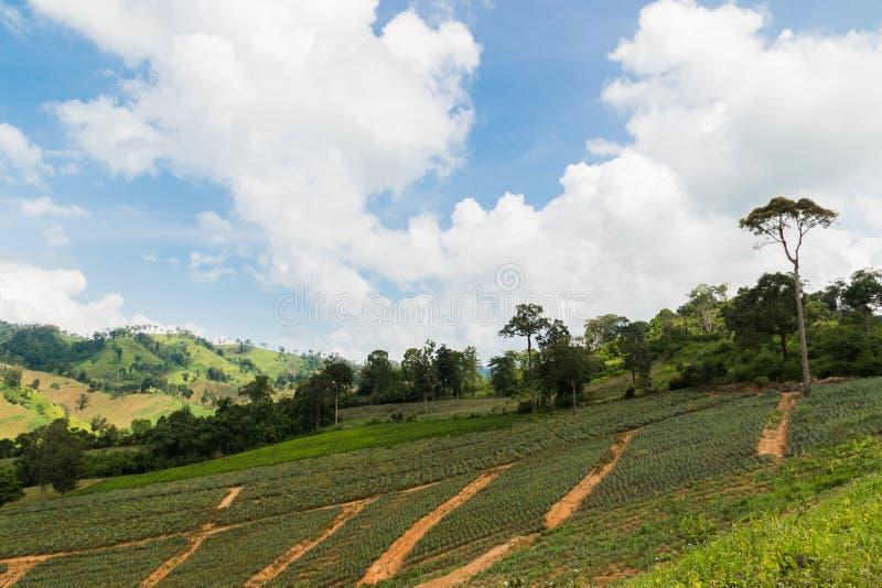 champ de ferme sous des nuages images libres de droits