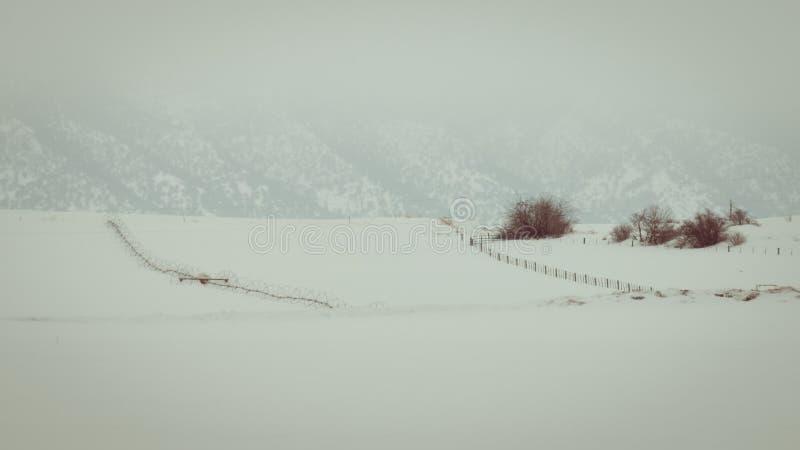 Champ de grain orageux d'hiver photos libres de droits