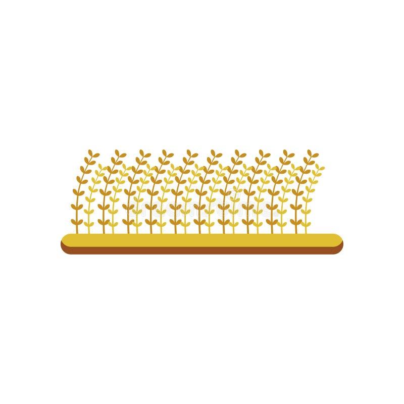 Champ de l'orge, élément de conception pour l'illustration de vecteur de secteur de la brasserie sur un fond blanc illustration libre de droits