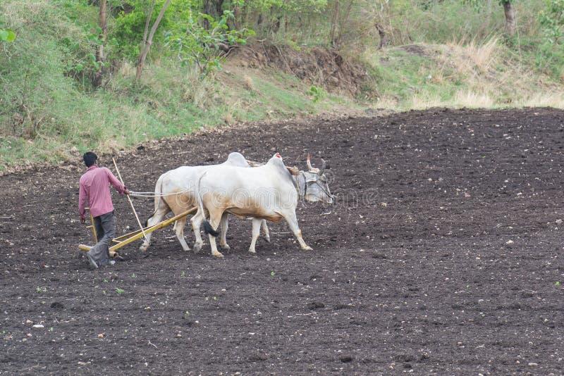 Champ de labourage d'agriculteur indien images stock