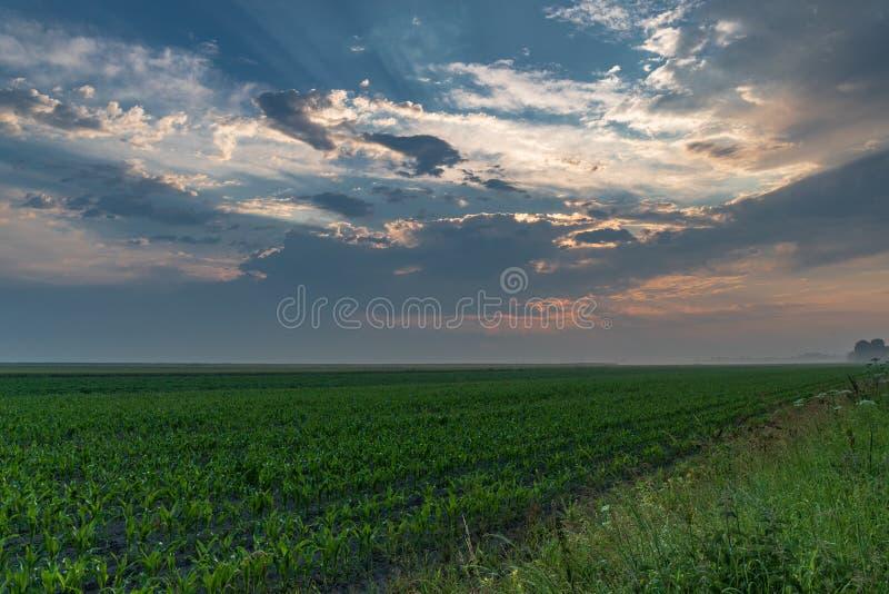 Champ de maïs après une lumière du soleil de tempête piaulant par les nuages image stock