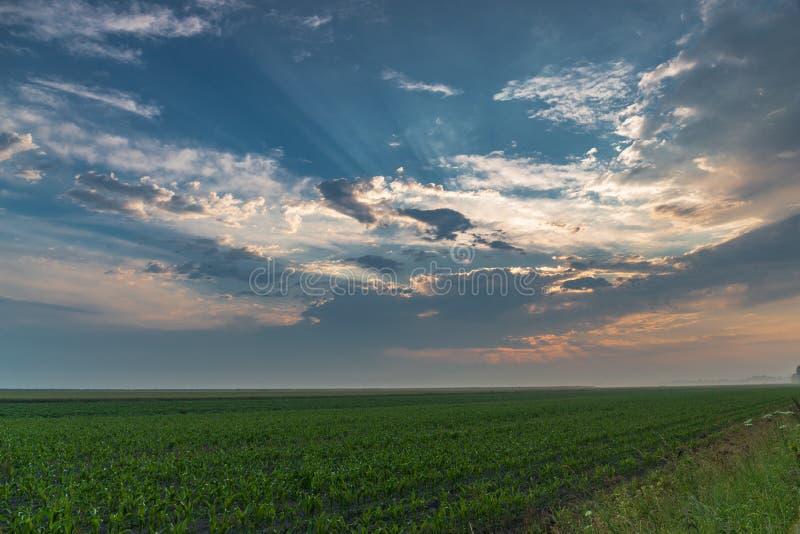 Champ de maïs après une tempête avec la lumière du soleil filtrant à l'aide des nuages images libres de droits