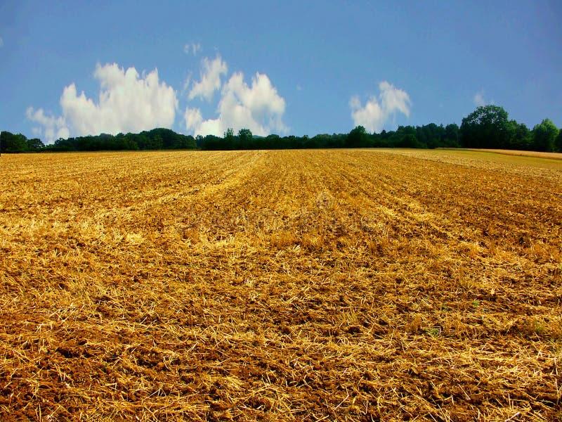 Champ de maïs moissonné photographie stock