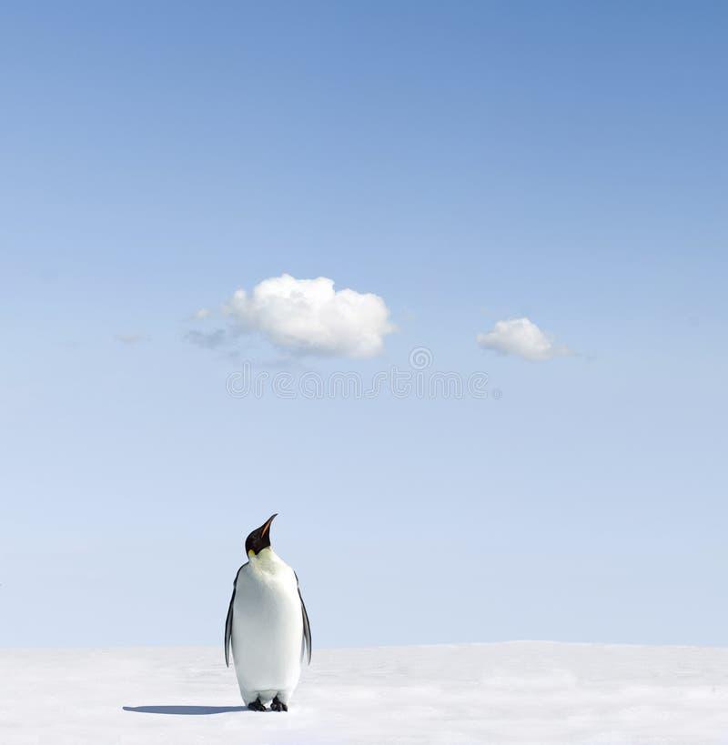 champ de neige de pingouin d'empereur photo stock