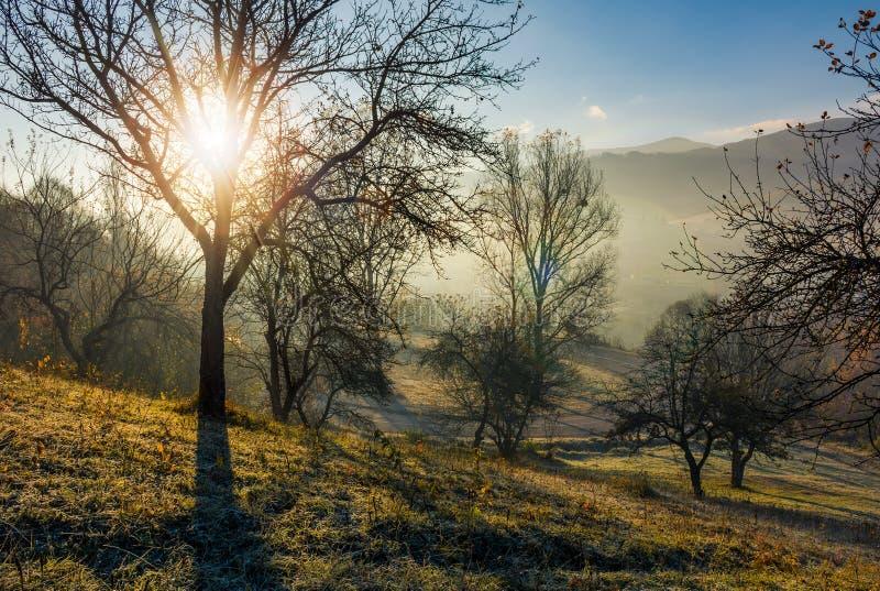 Champ de pommiers sur le flanc de coteau au lever de soleil d'automne photo stock