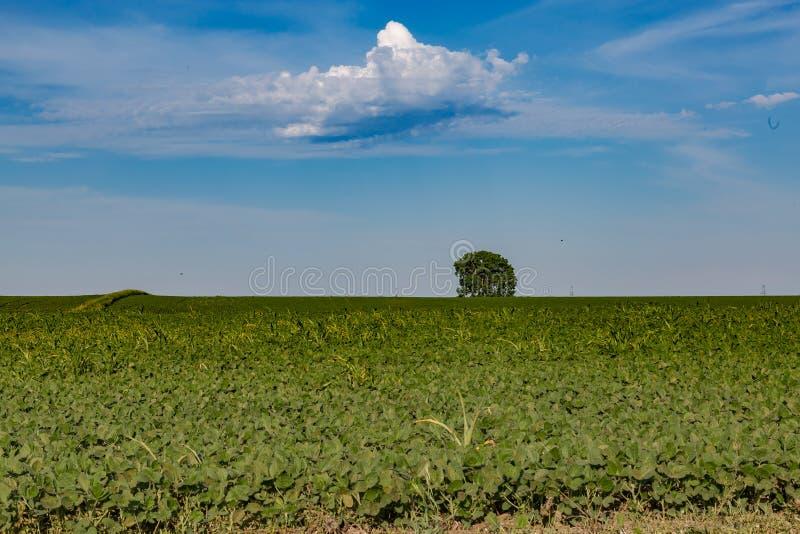 Champ de roulement de jeune ferme de soja quelque part en Omaha Nebraska image libre de droits