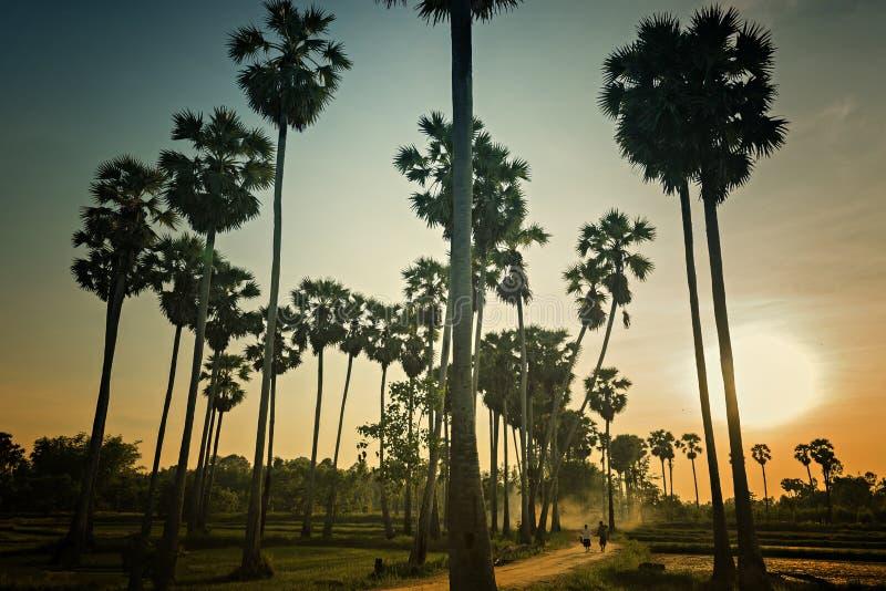 Champ de silhouette au coucher du soleil L'atmosphère de champ de soirée La Thaïlande rurale Image louche d'un arbre avec le couc photographie stock
