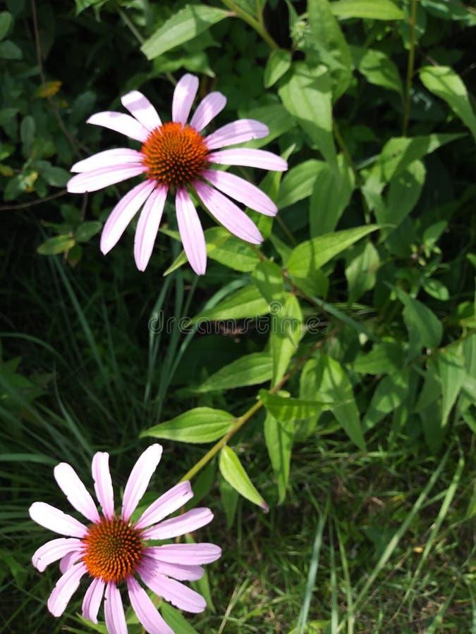 Champ de Wildflower de l'Ohio photographie stock