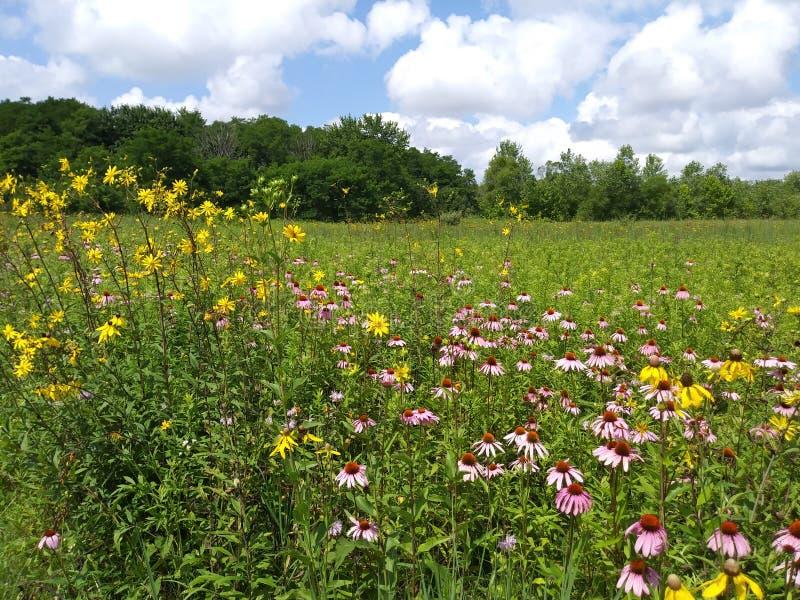Champ de Wildflower de l'Ohio photographie stock libre de droits