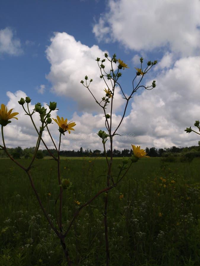 Champ de Wildflower de l'Ohio image libre de droits