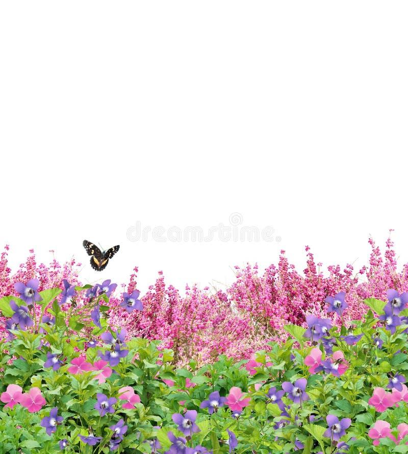 Champ des fleurs avec le papillon d'isolement sur le blanc images libres de droits