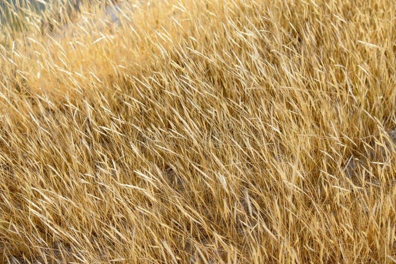 Champ des herbes image libre de droits