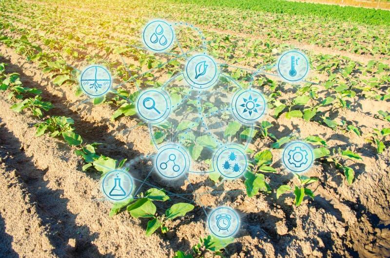 champ des légumes un jour ensoleillé Verts verts frais Innovations et développements dans l'agriculture Travail et sélection scie photographie stock libre de droits