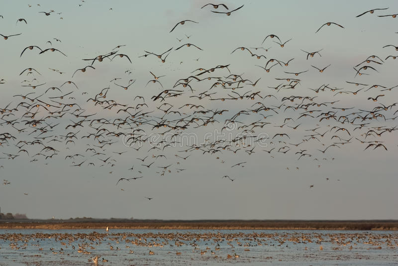 Champ des oiseaux photos stock