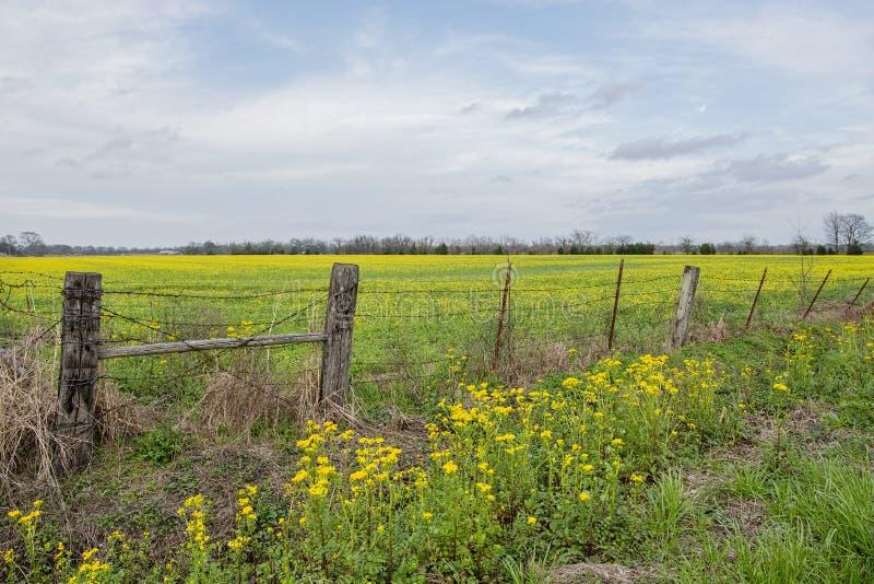 Champ des Wildflowers jaunes en Louisiane images stock