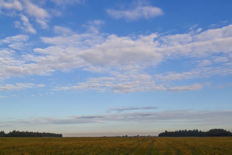 Champ et ciel avec des nuages Cumulus photo libre de droits