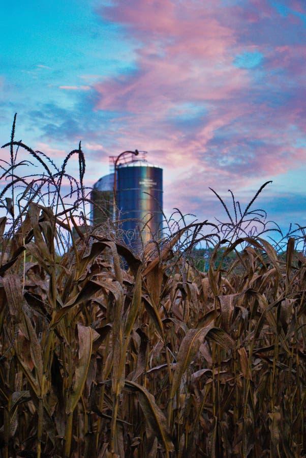 Champ et silo de maïs avec un coucher du soleil vibrant coloré à l'arrière-plan photos stock