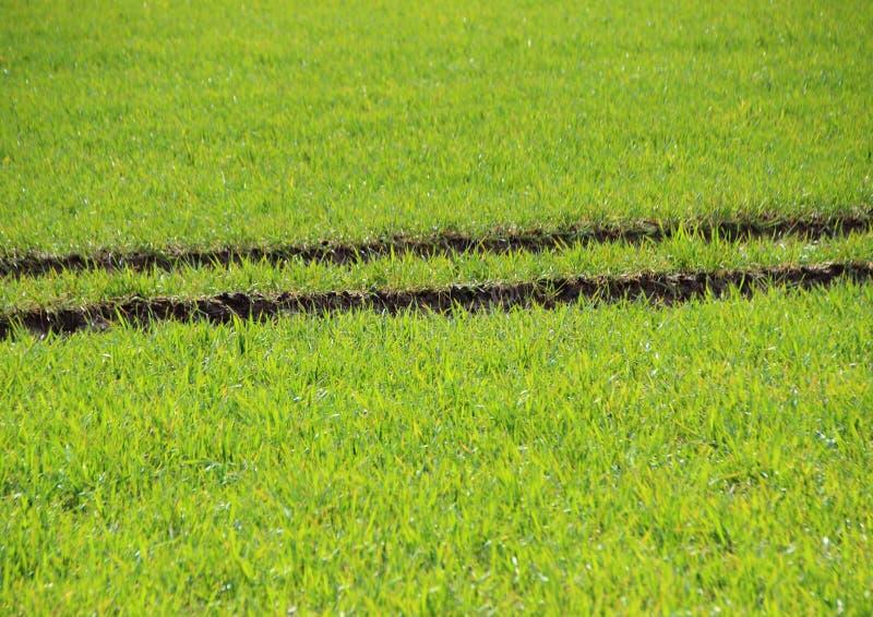 Champ frais de culture verte avec la trace de tracteur photographie stock