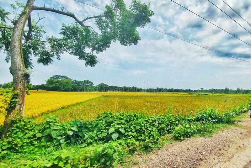 Champ gentil de village à Dacca image libre de droits