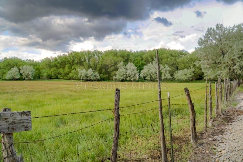 Champ herbeux et arbres luxuriants derrière le grillage et les courriers en bois rayant une route photos stock
