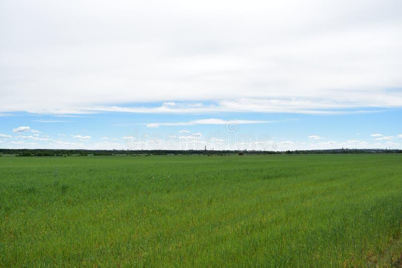 Champ illimité de village rural des nuages de ciel de cultures de céréale photo stock