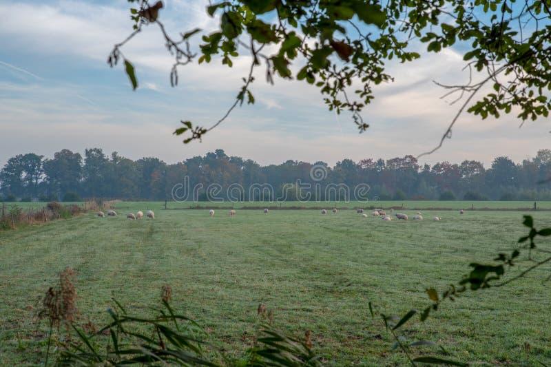 Champ néerlandais de paysage pendant le début de la matinée photographie stock libre de droits