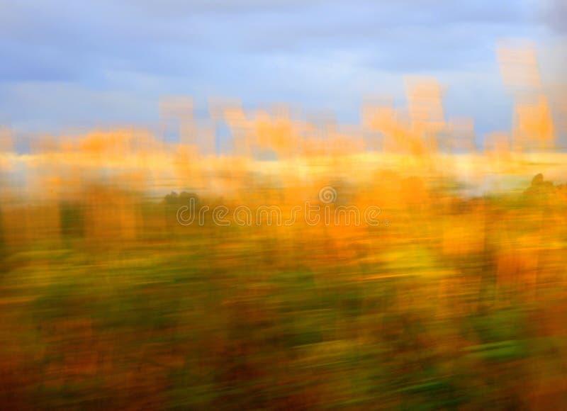 Champ orange photographie stock libre de droits