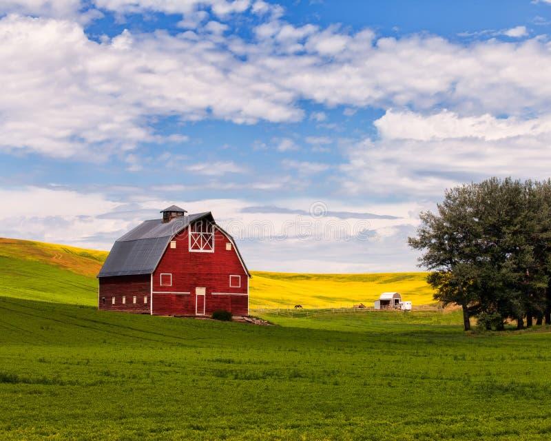 Champ rouge de grange et de Canola dans Palouse, WA image libre de droits