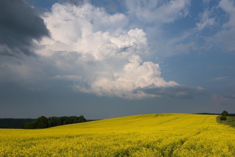Champ se développant coloré de jaune Paysage d'été avec des nuages d'orage photo libre de droits