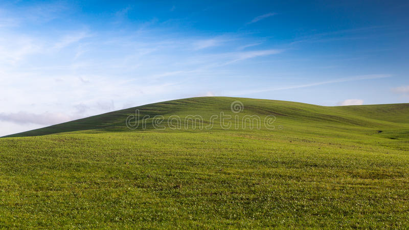 Champ vert de matin sur une colline toscane sous un ciel bleu avec des nuages images libres de droits
