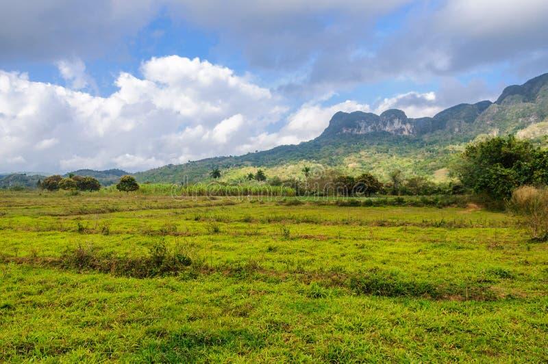 Champ vert en vallée de Vinales, Cuba photographie stock