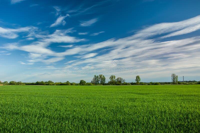 Champ vert, horizon et nuages blancs sur un ciel bleu photo libre de droits