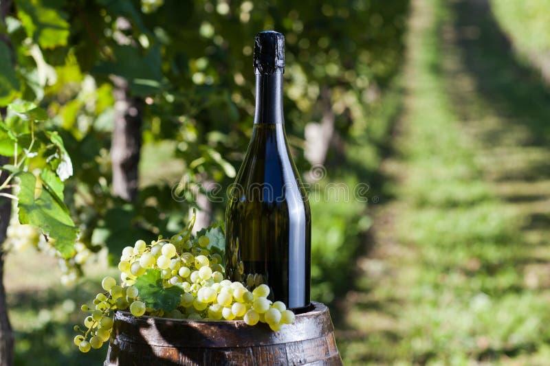 Champagne immagini stock libere da diritti