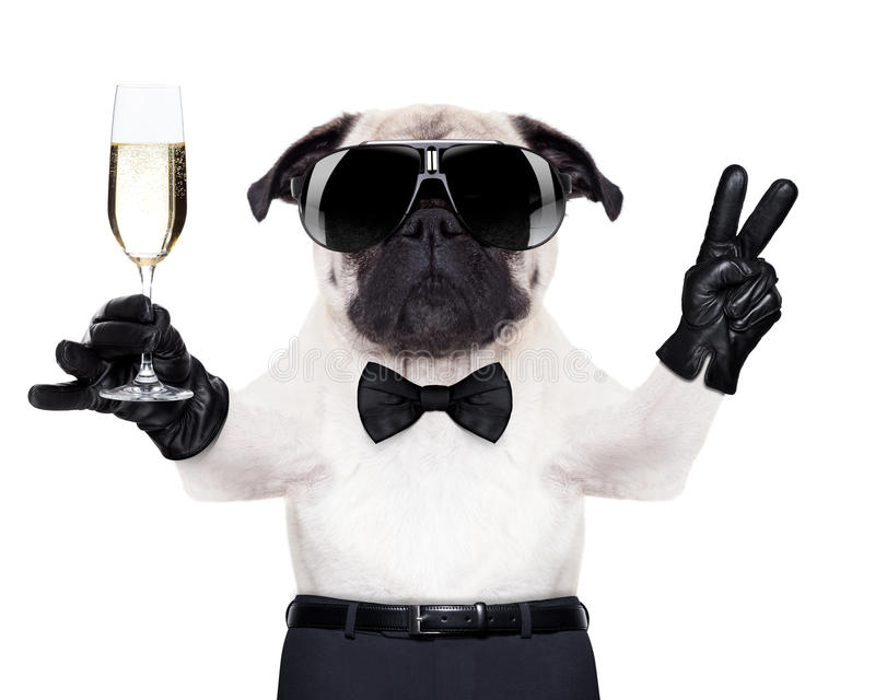 Champagne glass dog royalty free stock photography