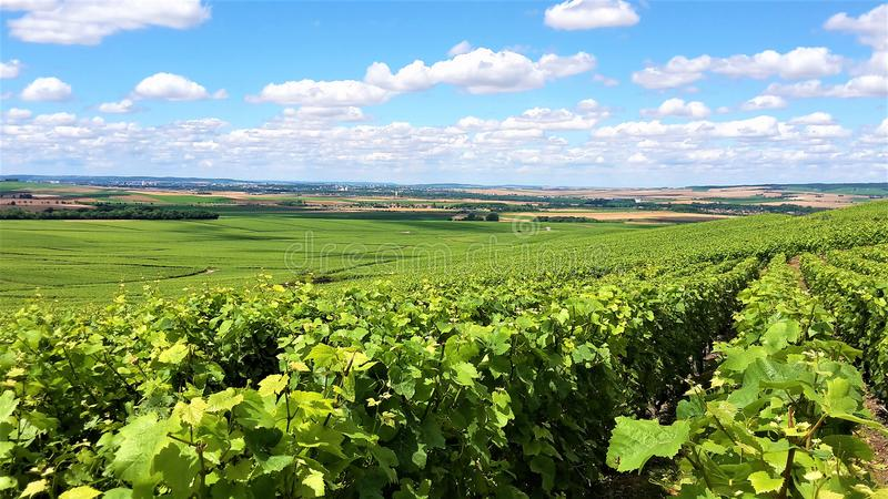 Champagne green summer vineyards stock photography