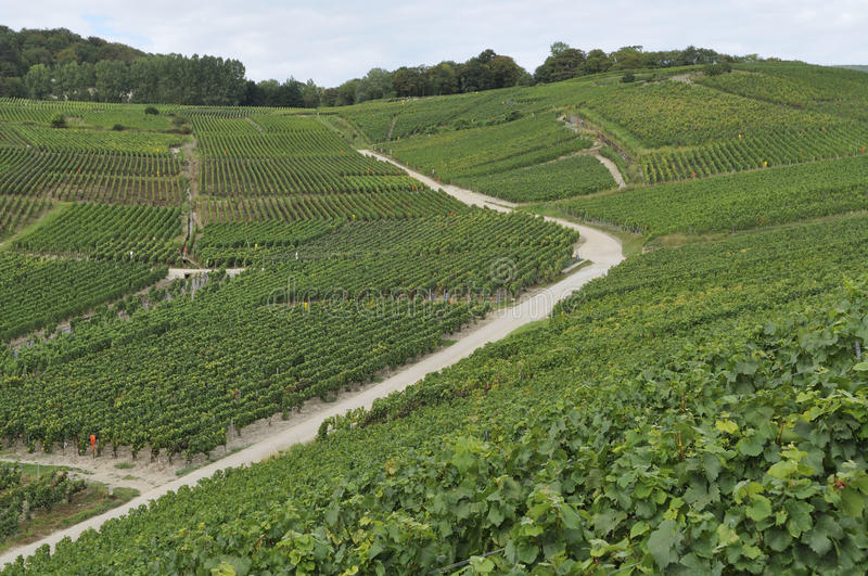 Champagne hilly vineyard #6, epernay stock photos